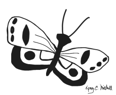 Butterfly-04